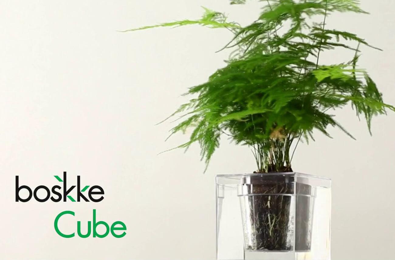 Boskke Cube: Self-Watering Plant Pot