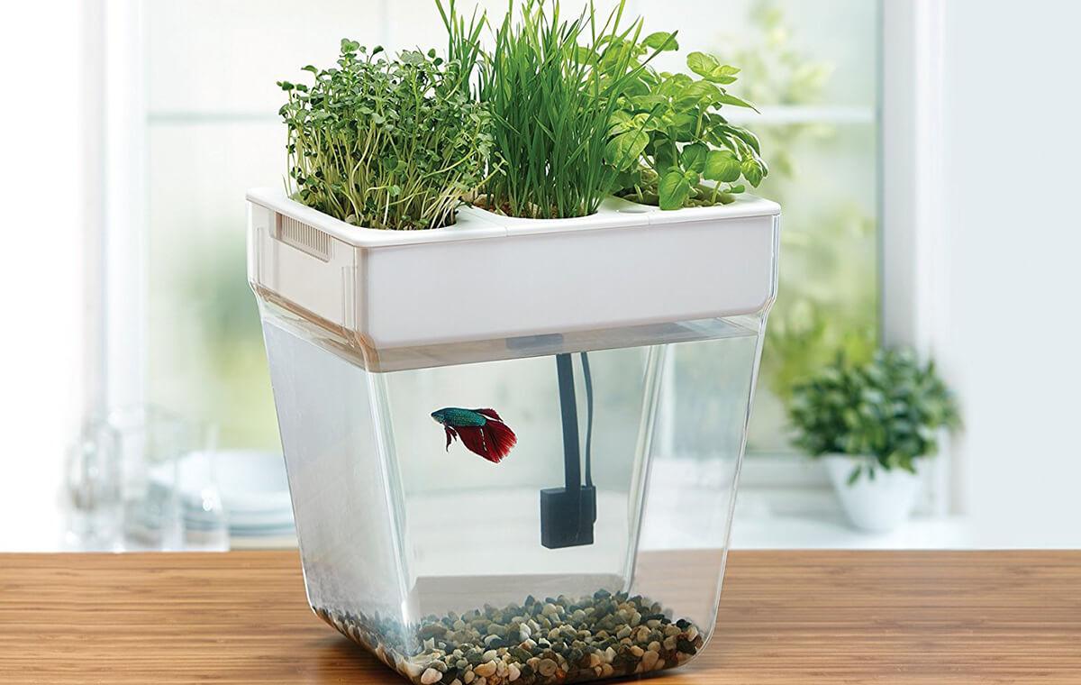AquaFarm: Self-cleaning Fish Tank that Grows Plant