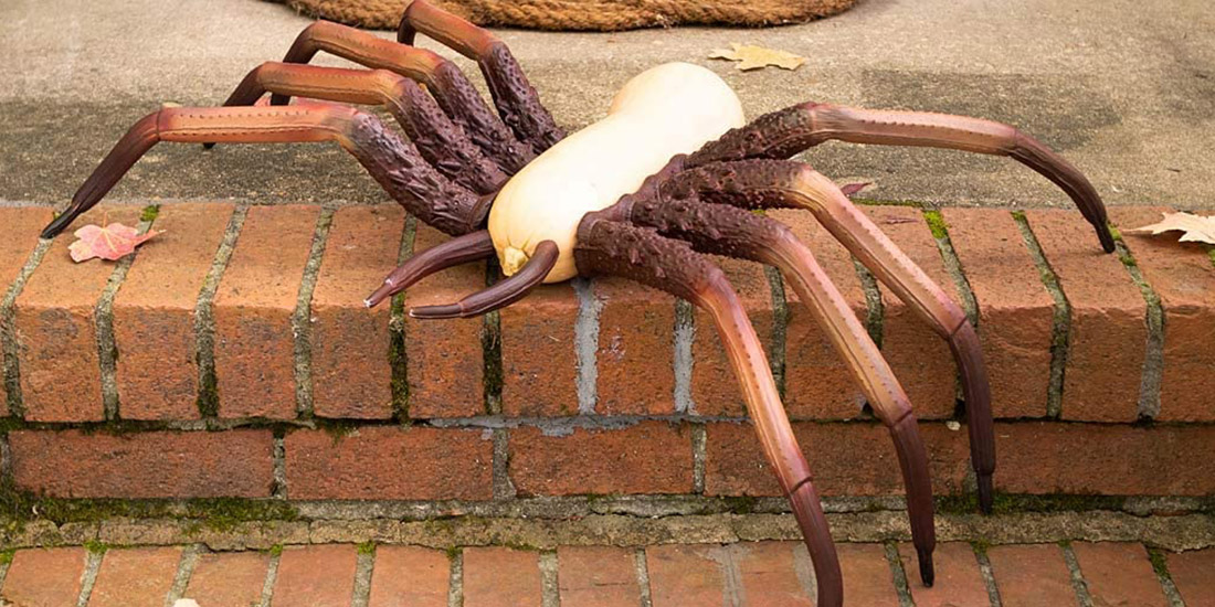 Creepy Spider Pumpkin Appendages: No More Messy Carving